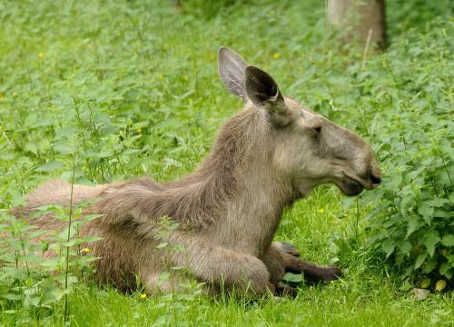 Wildpark Hundhaupten