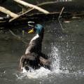 Vogelpark Arensberg